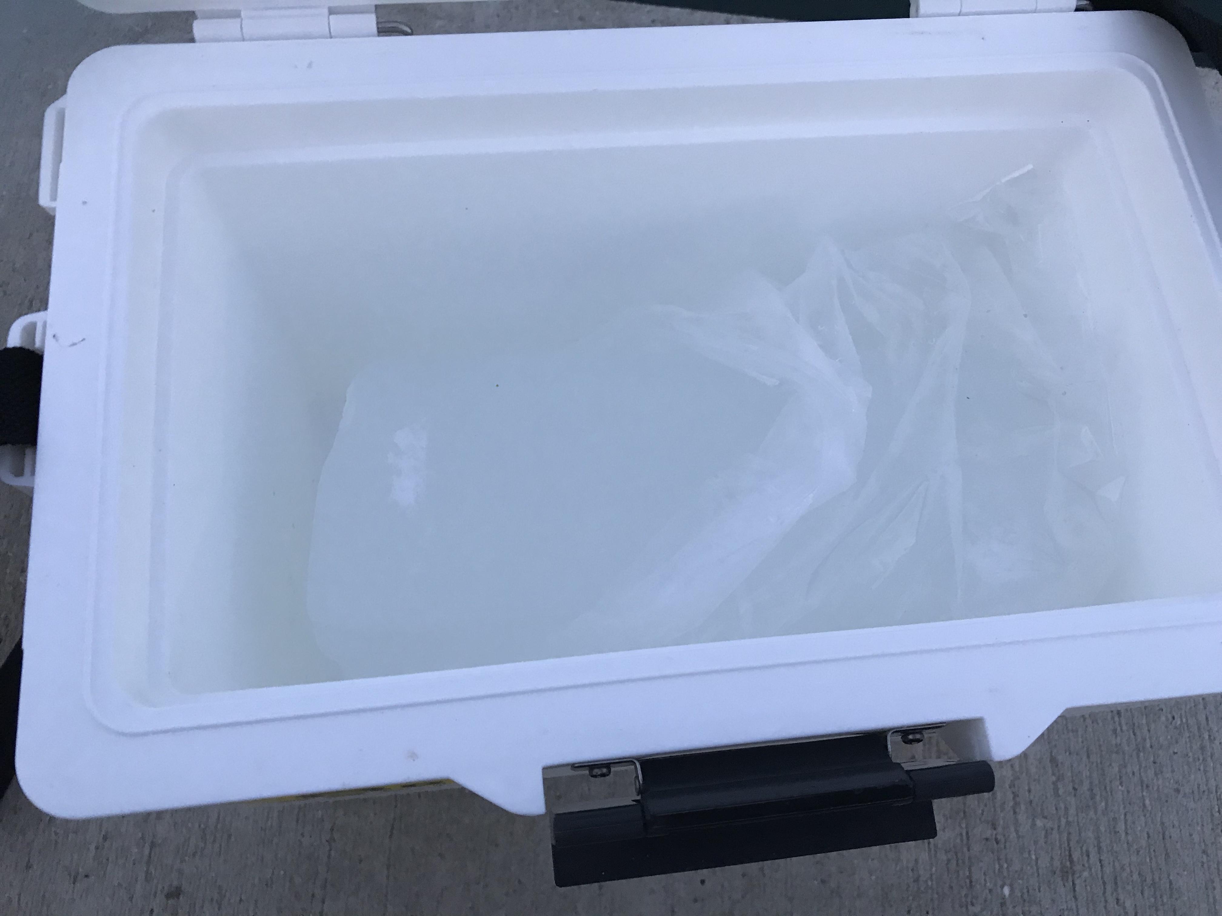 クーラーボックス氷