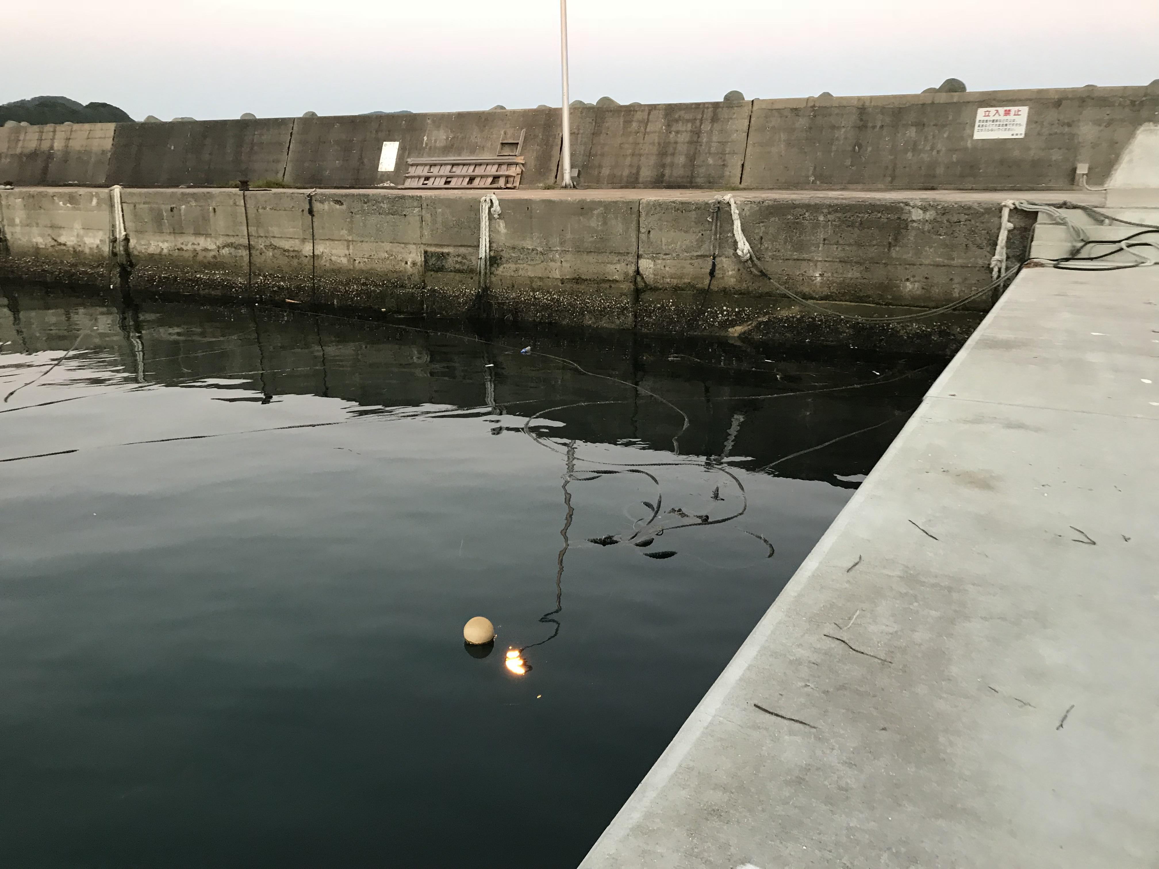 西の浦漁港スズキ逃げられた現場